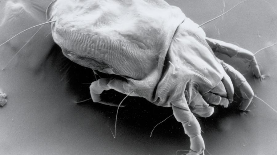 ácaros del polvo